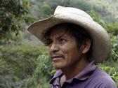 Stock Photo of honduras farmer of marcala latin america central