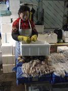 Korea fish squid on sale at karakan wholesale Stock Photos