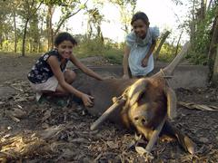 Nicaragua girls with pig jalapa the animal has Stock Photos