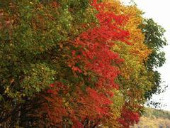 Russia autumn tints near lake tunaycha sakhalin Stock Photos
