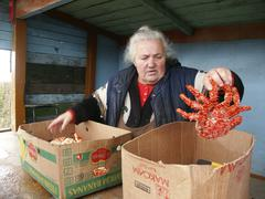 Stock Photo of russia woman female selling sea crabs sakhalin