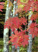russia autumn tints near lake tunaycha sakhalin - stock photo