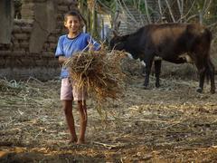 El Salvadorin poika ruokinta lehmät san francsisco Kuvituskuvat
