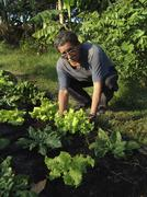 el salvador lettuce organic market gardening at - stock photo