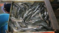 Eels in fish market asian Stock Footage