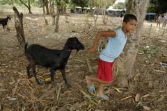 Brazil boy leading goat pernambuco 2005 south Stock Photos