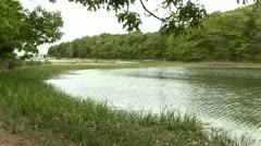 Tidal lagoon Stock Footage