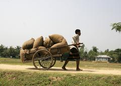 Bangladesh men males hauling loads of rice Stock Photos