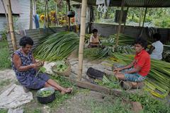 Fiji women females making rush mats lavena Stock Photos