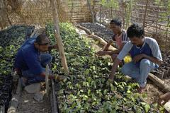 timor leste small nursery at usi takeno by - stock photo