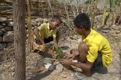 Timor leste children kids tending trees as part Stock Photos