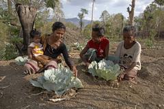 Timor leste vegetable and fruit garden farmed in Stock Photos