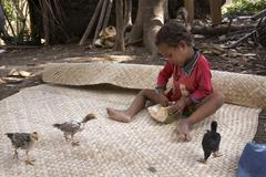 timor leste boy with chicks by 2007 east asia - stock photo