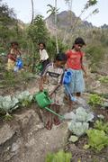 timor leste girls watering vegetable garden by - stock photo