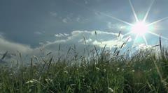Sun Star Waving Grass Stock Footage