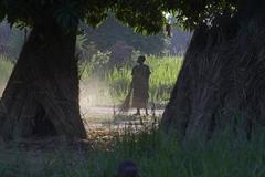 South sudan early morning scene on farm of yei Stock Photos