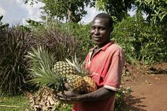 Uganda batambuze michael holding pineapples use Stock Photos