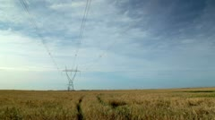 Powerline in Field of Barley Stock Footage