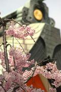 Stock Photo of tree japan honshu kansai osaka sumiyoshi ward