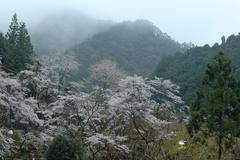 Japan honshu kansai wakayama prefecture mt koya Stock Photos