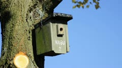 Birds´house Stock Footage