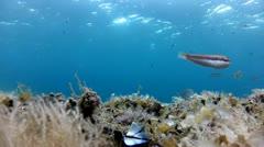 Vivid seabed Stock Footage