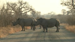 P02102 Rhinos on Road at Kruger National Park South Africa Stock Footage