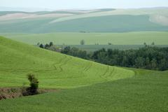 washington walla valley peas wheat farming farm - stock photo