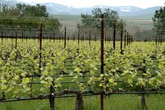 Wine washington walla valley abeja winery grapes Stock Photos