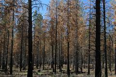 Fire oregon deschutes high desert plateau forest Stock Photos