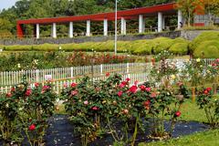 Flower rose japan honshu osaka park garden area Stock Photos