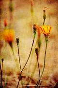 autumn field - stock photo