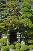 Stock Photo of tree japan honshu koyasan world heritage site