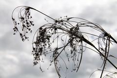 overcast brush - stock photo
