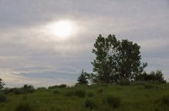 woodland berm grass grasses feathered moon sun - stock photo