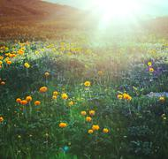 Stock Photo of sunny meadow