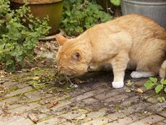 Cat vomiting Stock Photos