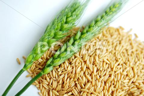 Stock photo of green wheat ears