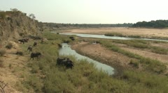 P02133 Elephant Herd at Kruger National Park Along River Stock Footage