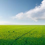 Rice crop under clouds sky Stock Photos