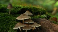 Fungus on a tree Stock Footage