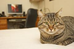 Cat in the bed Stock Photos