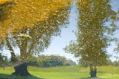 water reflection of trees - stock photo
