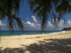 Exotic atlantic shore beach in barbados Stock Photos