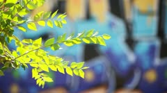 Green leaves over blurred graffiti background Stock Footage