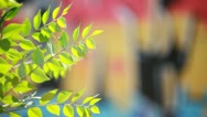 Stock Video Footage of Green leaves over blurred graffiti background