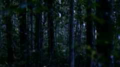 Mystical creature wearing a long cloak in the dark forest - stock footage
