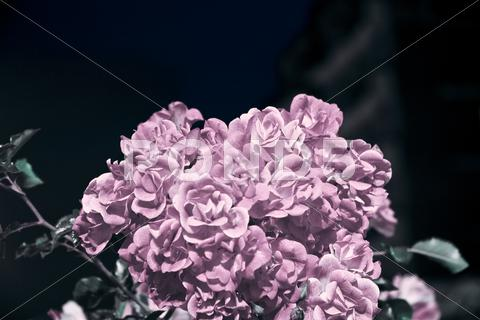 Stock photo of pink bouquet