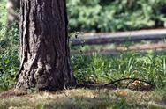 Tree trunk in park Stock Photos
