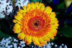 Blumenbild1 - stock photo